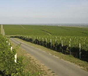 wine roads, Baranja, Sobe, Bilje, Kopački rit